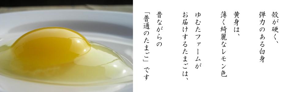 普通の卵 レモン色