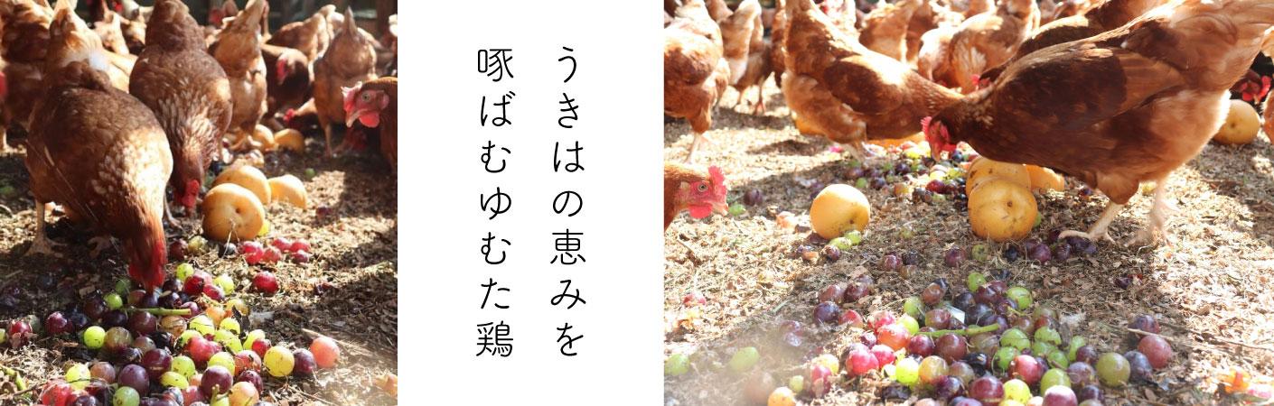 うきはの恵みを啄むゆむた鶏